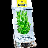 Искусственное растение гигрофила Tetra DecoArt Plantastics Hygrophila 30 cм, фото 2
