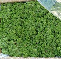 Стабілізований мох (ягель) новий відтінок зеленого 500г