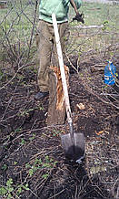 Выкорчевать пень дерева в ручную в Харькове и области