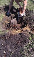 Выкорчевать дерево в Харькове и области