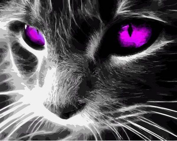Набор для рисования 40×50 см. Кошачьи глаза