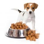 Сухой корм для собак и щенков