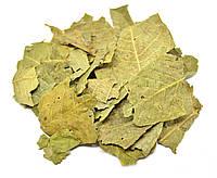 Грецкий орех листья, фото 1