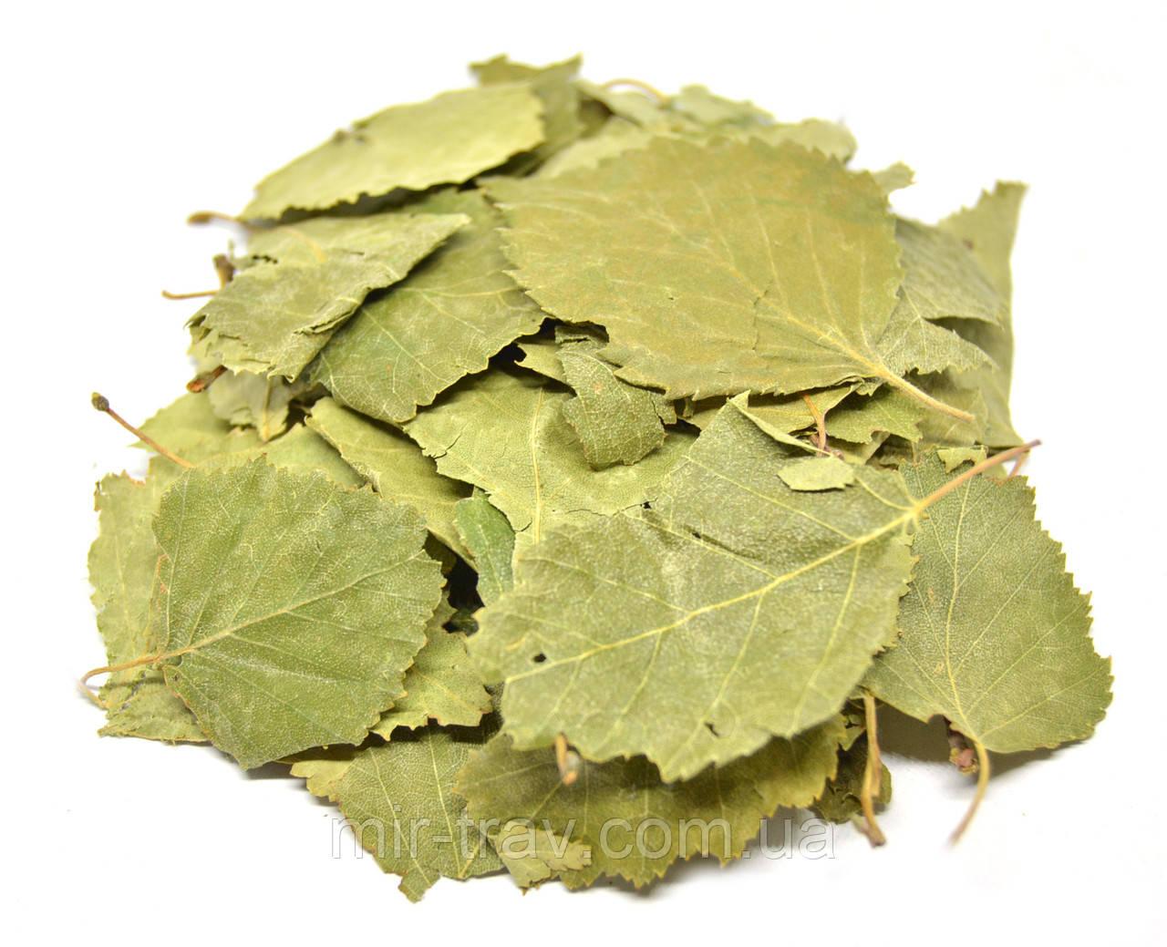 Береза повислая листья