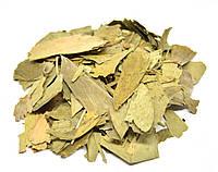 Гинкго билоба листья