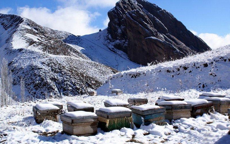Подготовка к зимовке и содержание пчел зимой