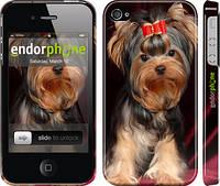 """Чехол на iPhone 4s Йоркширский терьер """"929c-12"""""""