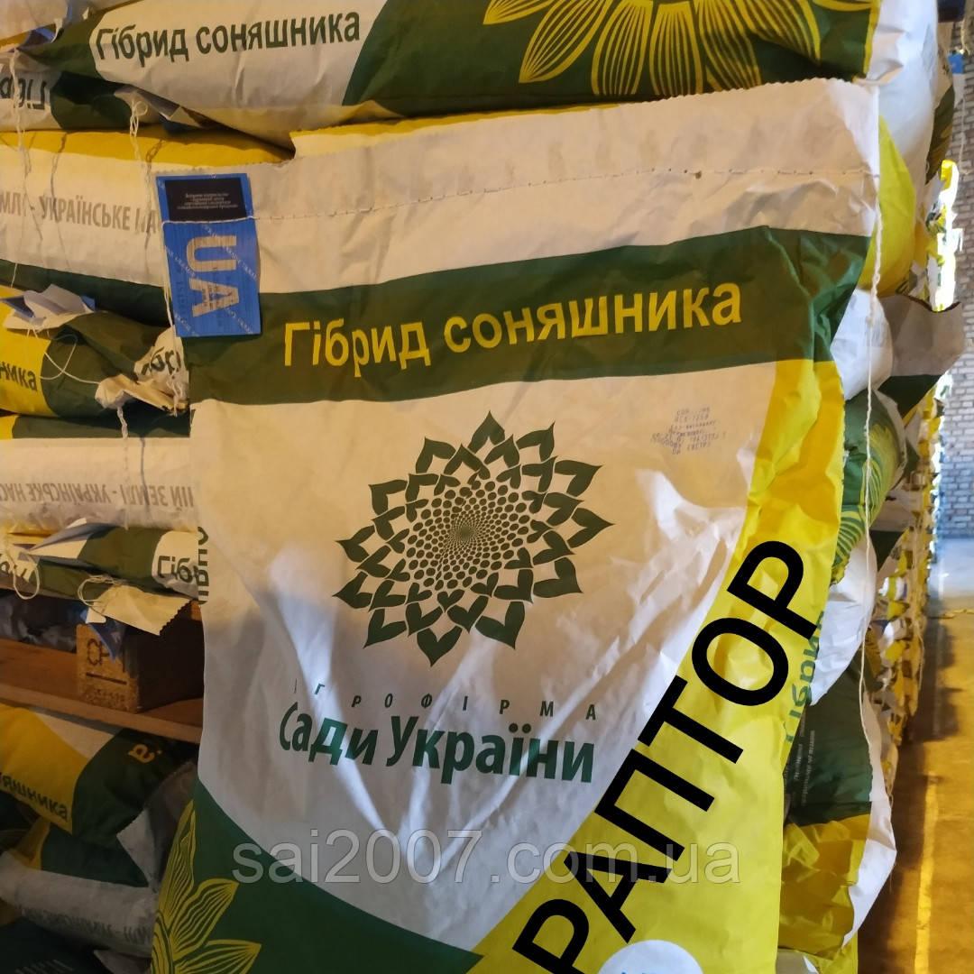 Семена подсолнечника Раптор нсх 7258 стойкий к 7 рас заразихи A-G, среднеранний 105 дн