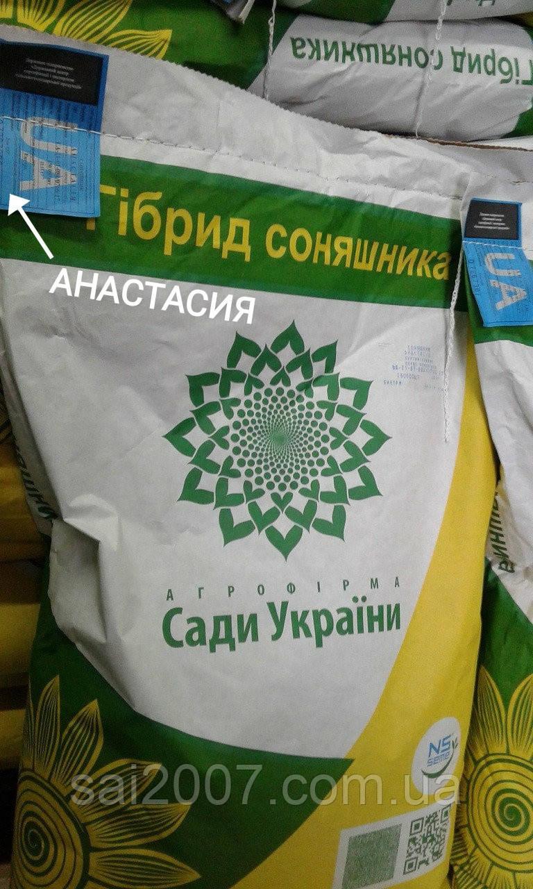 Семена подсолнечника Анастасия гибрид
