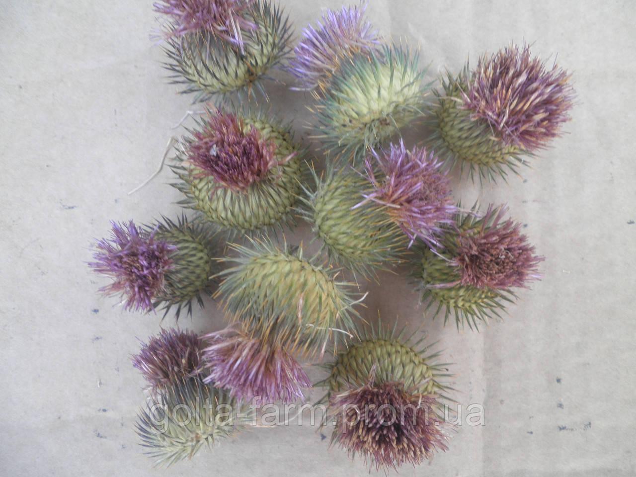Татарник цветочные корзинки 50 грамм.