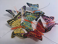 Бабочки пестрые