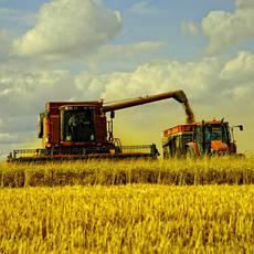 Сельскохозяйственные услуги