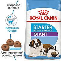 Royal Canin Giant Starter 4кг - корм для щенков до 2-х месяцев, беременных и кормящих сук  гигантских пород