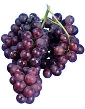 Виноград сорт Moscato Amburgo N