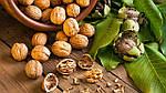 Причины, почему не плодоносит грецкий орех, всё о вредителях