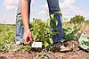 Выращивание грецкого ореха как бизнес, перспективное направление