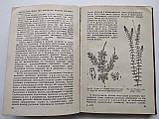 1936 В мире растений. А.И.Молодчиков. Биомедгиз., фото 6