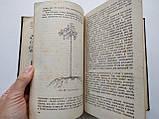 1936 В мире растений. А.И.Молодчиков. Биомедгиз., фото 9