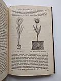 1936 В мире растений. А.И.Молодчиков. Биомедгиз., фото 7