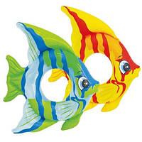 Красивые тропические рыбки для Ваших малышей, надувной круг для деток 3-6 лет