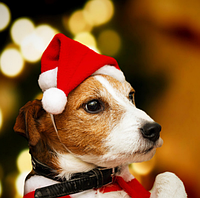 Шапочка новогодняя для собак и кошек