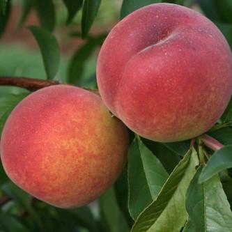 Персик Редхейвен - средний, крупноплодный, зимостойкий