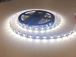 Светодиодная лента LED 5050 60 12V IP33 холодная СТАНДАРТ