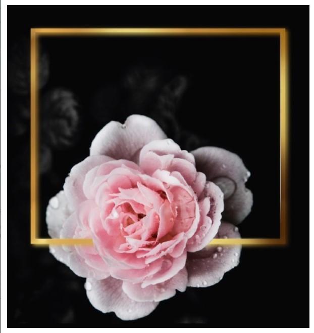 Подарочный бумажный пакет КВАДРАТ 24*24*10 см Розовая роза