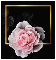 Подарунковий паперовий пакет КВАДРАТ 23*24*10 см Рожева троянда