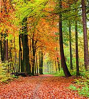 Фотообои флизелиновые 3D Природа 225х250 см Осенний лес (MS-3-0099)