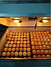 Инкубатор автоматический Наседка 140, фото 7