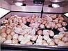 Инкубатор автоматический Наседка 140, фото 9