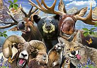 Фотообои флизелиновые 3D 368х254 см Забавные животные - селфи (12863V8)