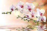 Фотообои флизелиновые 3D Цветы 300х210 см Ветка орхидеи (0147-300-210)