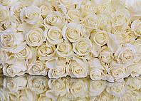 Фотообои флизелиновые 3D Цветы 368x254 см Белые розы (WM007V8)