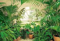 Фотообои бумажные на стену 366х254 см 8 листов: Вид из окна Зимний сад №231