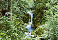 Фотообои бумажные на стену 366х254 см 8 листов: природа, Водопад в лесу №279