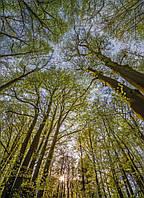 Фотообои на плотной полуглянцевой бумаге для стен 184*254 см из 4 листов:  Под деревьями