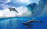 Фотообои 3D море (флизелин, бумага) 368х254 см : Дельфины на волнах  (188P8CN)