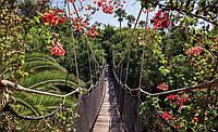 Фотообои 3D природа, лес (254х184, 368х254) Подвесной мост (250CN)