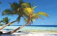Фотообои 3D природа, море 368х254 см : Пальмы и тропики (8-005P8CN)