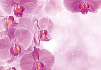Фотообои 3D цветы (бумага,флизелин) 368х254 см : Волшебные орхидеи (149P8CN)