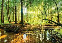 Фотообои 3D Природа 368x254 см Зеленый лес и яркий свет (10513CN)
