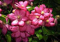 Фотообои 3D цветы 368x254 см Много климатисов (1557CN)