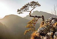 Фотообои 3D Природа (плотная бумага 368х254 см) Дерево на скале (10511CN)