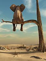 Фотообои готовые 184x254 см Слон на дереве (11898CN)