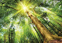 Фотообои 3D природа 254x184 см Свет в лесу (10112CN)