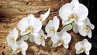 Фотообои 3D цветы 368х254 см : Яркие, белые орхидеи (CN1017)