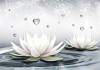 Фотообои 3D цветы, лилии 368х254 см : Кувшинка и капли воды (3509.21098)