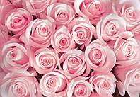 Фотообои 3D цветы (флизелиновые, плотная бумага) 368x254 см Розовые бутоны  роз (2168CN), фото 1